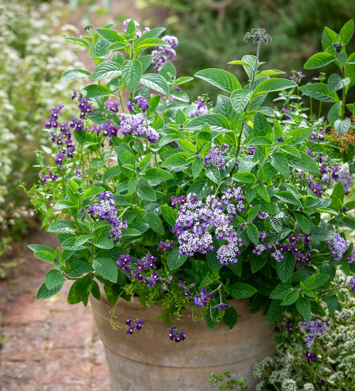Supreme Scent Pot Collection