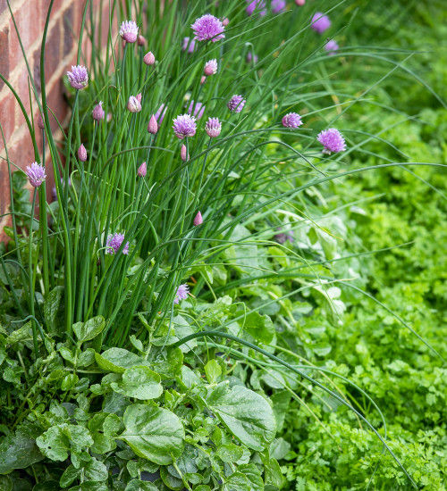 Spring Herb Collection