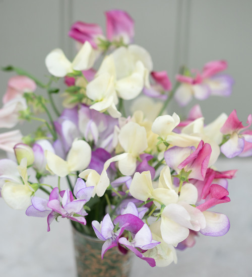 Wedding Party Sweet Pea Container Collection