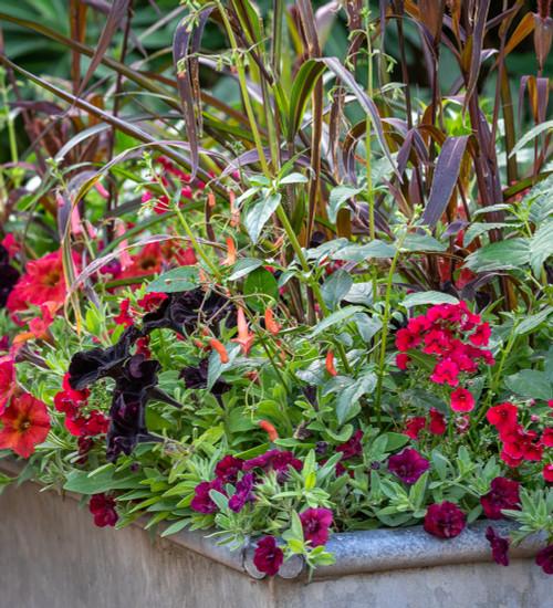 Velvet Trough Pot Collection