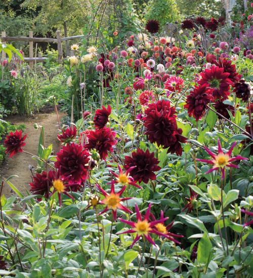 The Cutting Garden, 25 years on with Sarah Raven at Oxleaze Barn, Gloucestershire