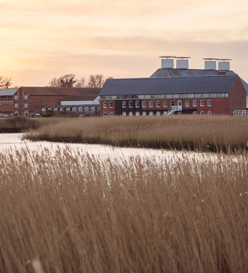 The Cutting Garden, 25 years on with Sarah Raven at Snape Maltings, Suffolk