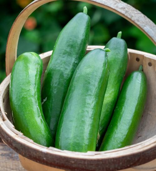 Cucumber 'La Diva'