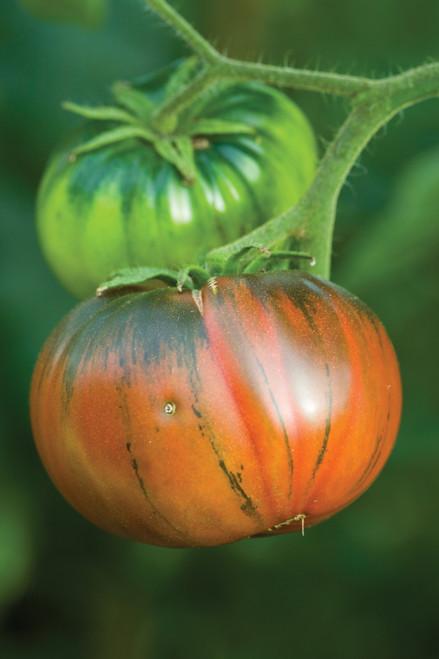 Tomato 'Noire de Crimèe'