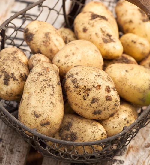 土豆夏普的表达