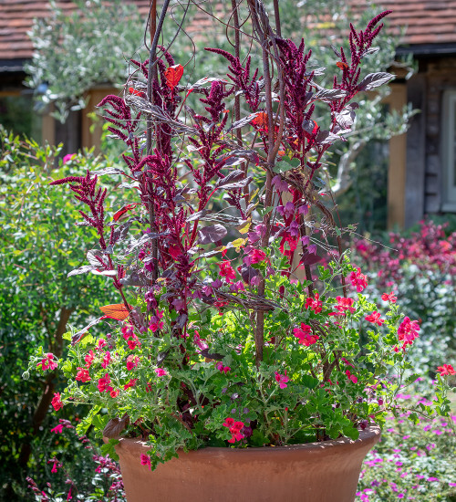 Blackberry Lace Container Collection