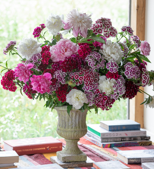 Dianthus and Peonies