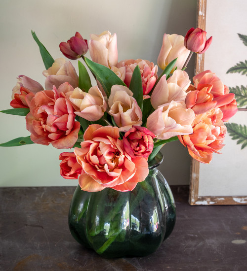 Coral Sand Tulip Collection