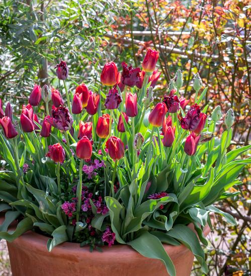 Crimson and Black Velvet Pot Collection