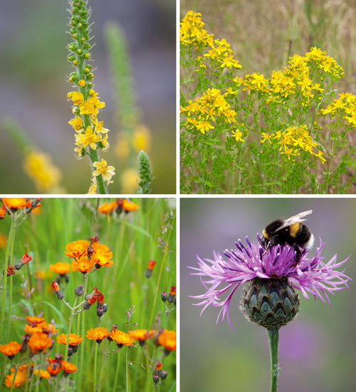 Bee-Friendly Wildflower Collection