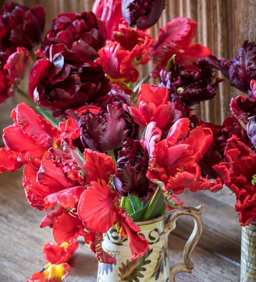 Jasper Conran Tulip Collection