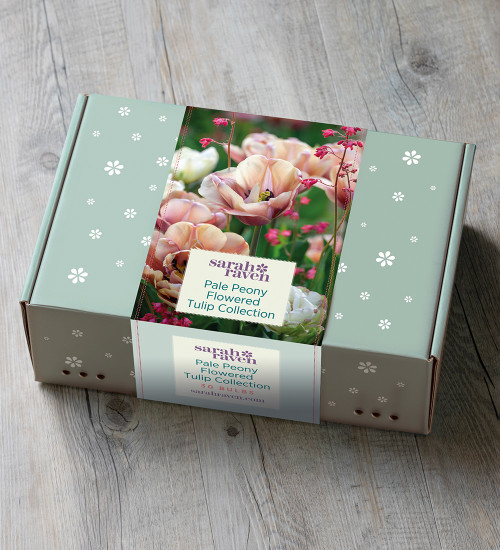 Pale Peony Flowered Tulip Collection in a Gift Box (30 bulbs)