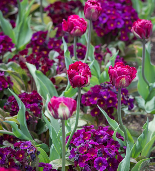 Spring Swathes of Velvet Collection