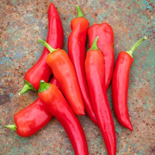 Chilli Pepper 'Hot Shakira'