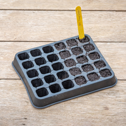 Rubber Seed Tray