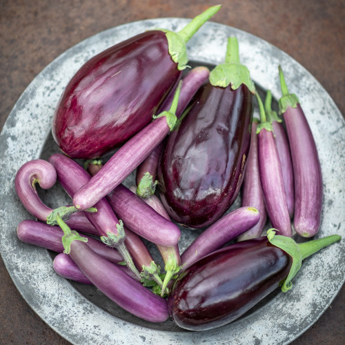 New Aubergine Collection