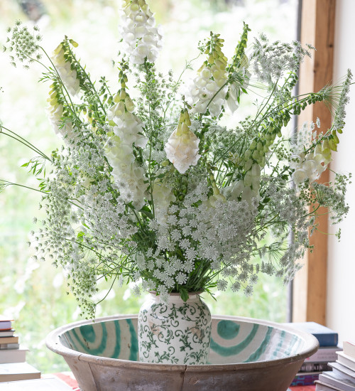 Foxglove and Ammi Collection