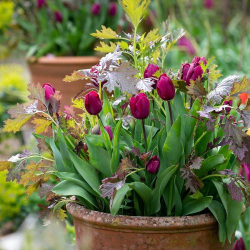 Edible and Ornamental Pot Topper Pair