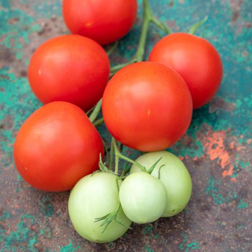 Tomato 'Akron' F1