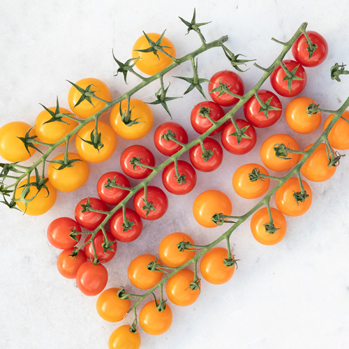 Rainbow Tomato Collection