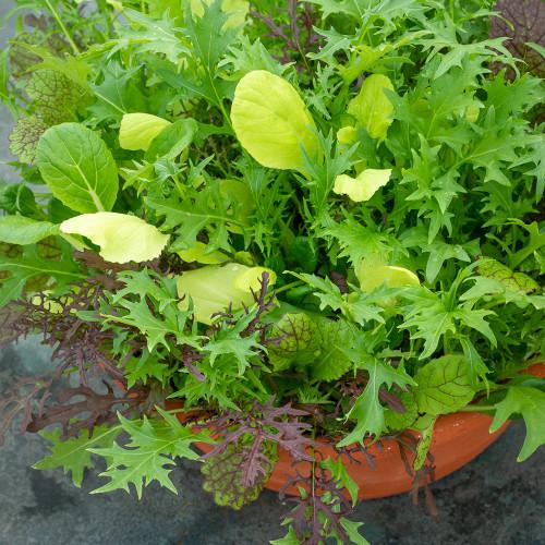 Autumn and Winter Pot Mix