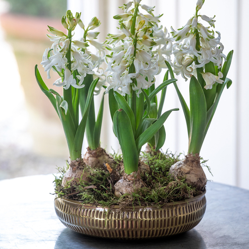Potted Hyacinths in a Hammered Metal Bowl