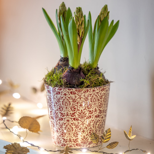 Potted Hyacinths in a Floral Pot