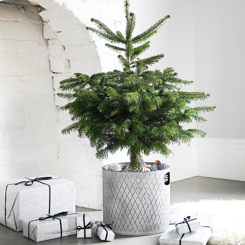 Zinc Christmas Tree Bucket