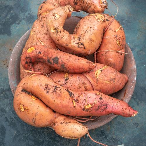 Sweet Potato 'Beauregard' Organic