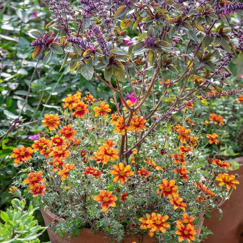 The Saffron and Indigo Pot Collection