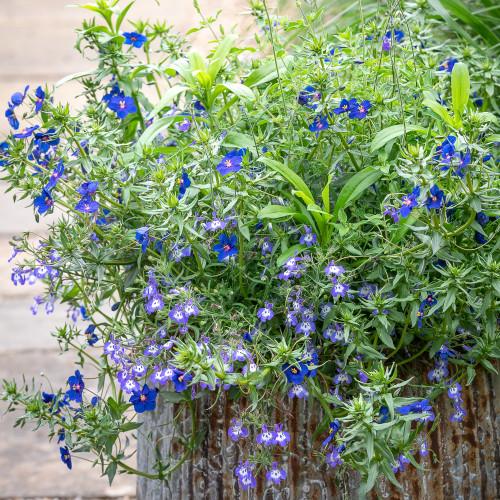 True Blue Pot Collection