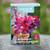 Sarah Raven Harlequin Sweet Pea Seed Tin Collection