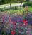 Paint Box Cut Flower Collection