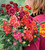 Jewel Chrysanthemum Collection