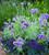 Purple Pot Collection