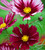 Crimson Silk Pot Collection