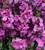 Rich Velvet Wallflower Collection