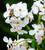 Impressionist Flower Collection