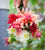 Best Ever Dahlia Collection in a Gift Box (6 tubers)