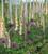 Fantastic Allium Collection