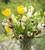 Tulip 'Golden Apeldoorn'