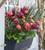 Window Box Tulip Collection
