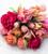 Tulip 'Apricot Copex'