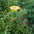 Petal Birdfeeder