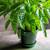 Green Copenhagen Pot and Saucer Sets