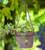 Hanging Terracotta Planter