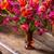 Favourite Amber Vase