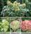 Happy Hydrangea Pot Collection