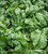 Spinach and American Land Cress Collection