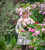 A Year Full of Flowers with Sarah Raven at Barns & Yard at Hanley Hall, Worcestershire
